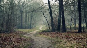 Preview wallpaper track, wood, leaves, earth, autumn, emptiness, fog, dampness