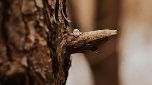 Preview wallpaper ring, tree, bark, blur