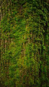 Preview wallpaper tree, bark, moss, texture
