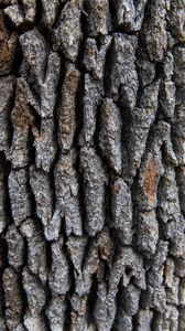 Preview wallpaper tree, bark, surface, rough, texture