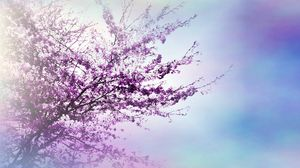Preview wallpaper tree, branches, flowers, spring, luminescence