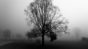 Preview wallpaper tree, branches, fog, haze, black and white