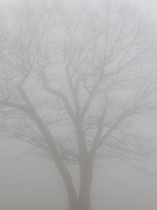 Preview wallpaper tree, branches, fog, haze, gloomy