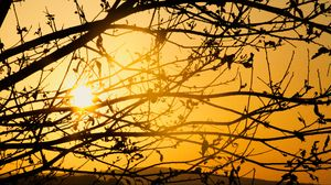 Preview wallpaper tree, branches, sun, sunset, yellow