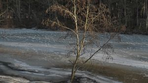 Preview wallpaper tree, coast, river, ice, spring