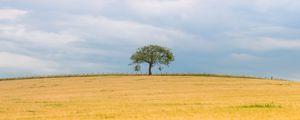 Preview wallpaper tree, field, nature, minimalism