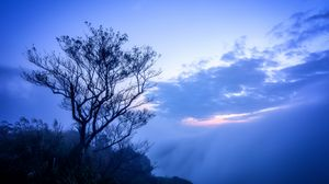 Preview wallpaper tree, fog, branches, sky, clouds