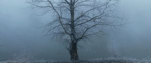 Preview wallpaper tree, fog, haze, hoarfrost, frost