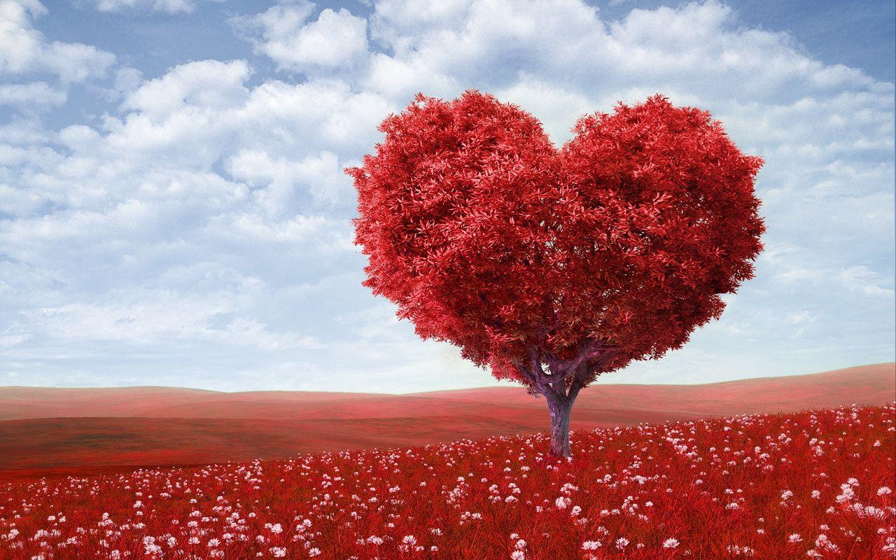 1280x800 Wallpaper tree, heart, photoshop, field, grass, romance