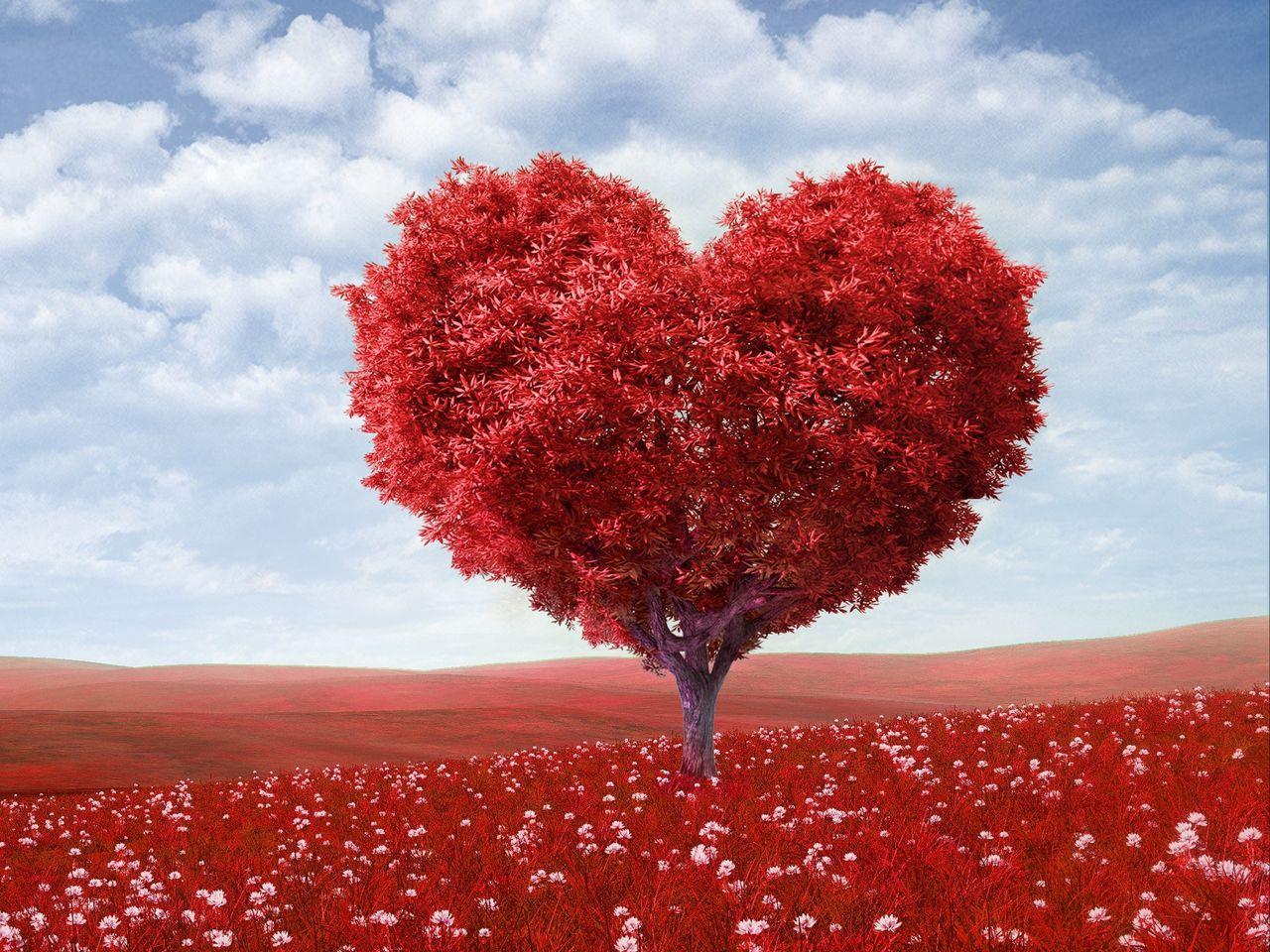 1280x960 Wallpaper tree, heart, photoshop, field, grass, romance