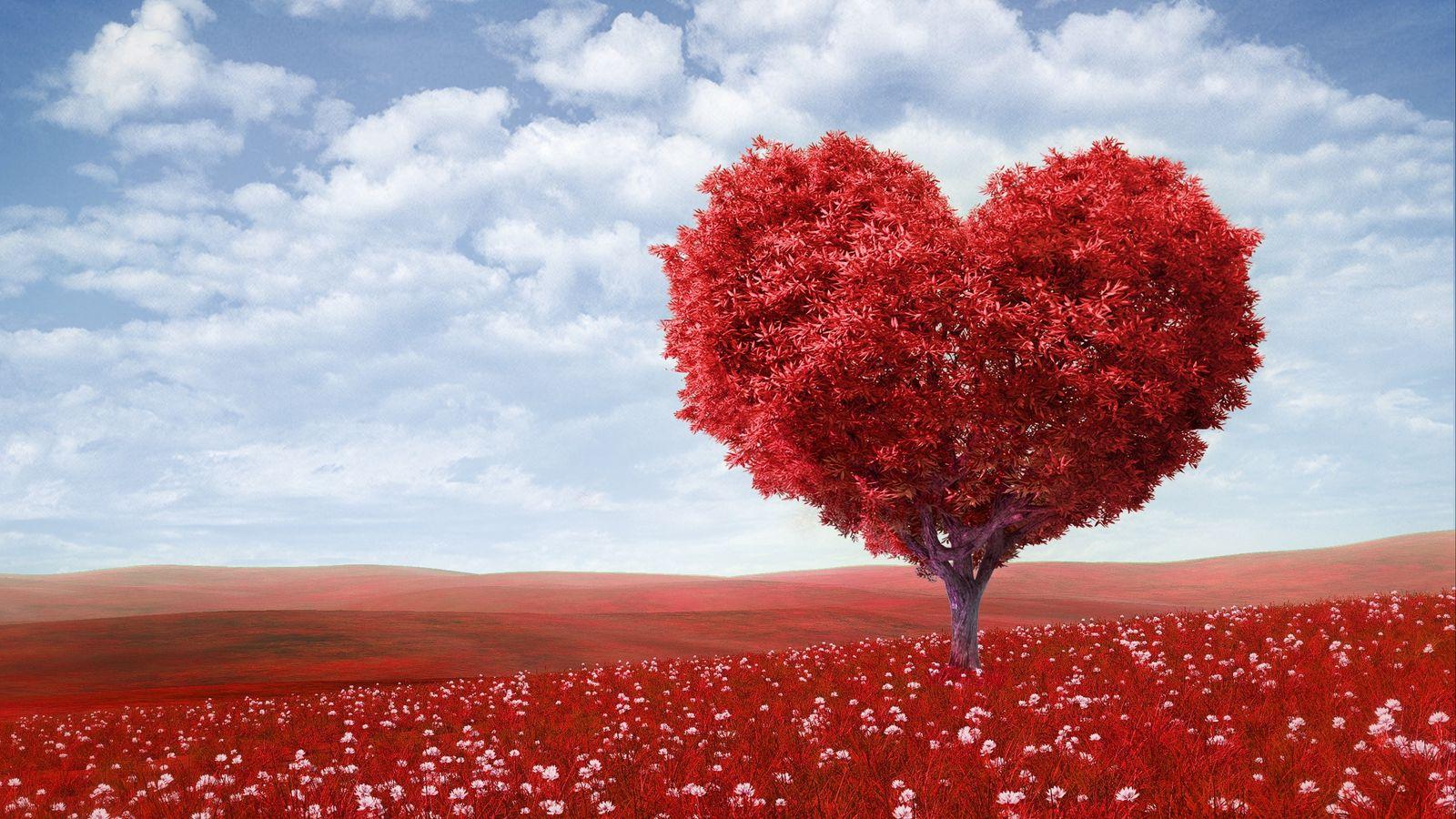 1600x900 Wallpaper tree, heart, photoshop, field, grass, romance