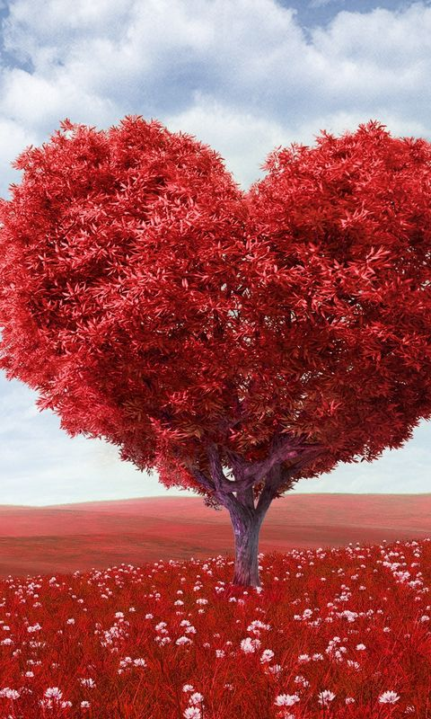480x800 Wallpaper tree, heart, photoshop, field, grass, romance