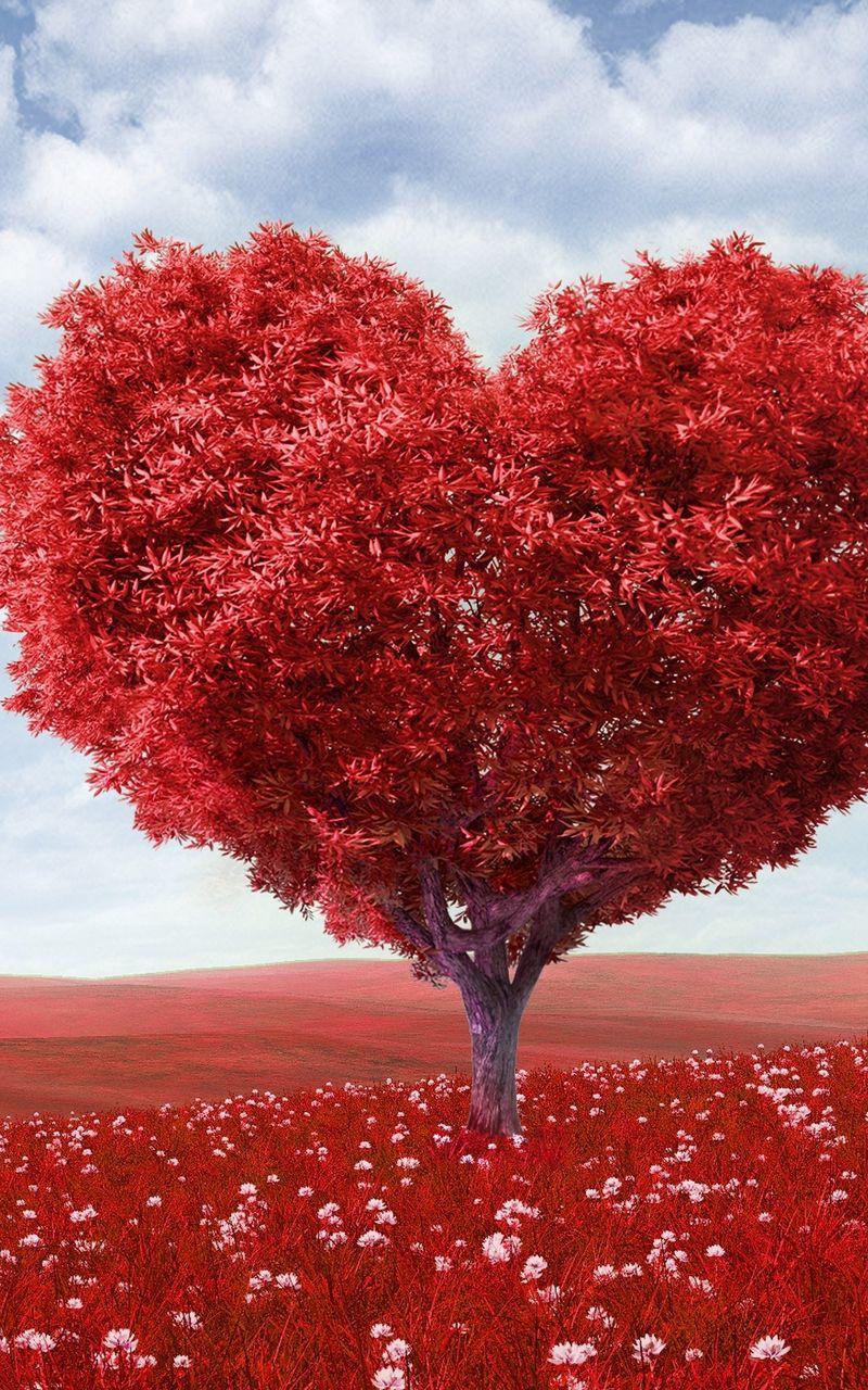 800x1280 Wallpaper tree, heart, photoshop, field, grass, romance
