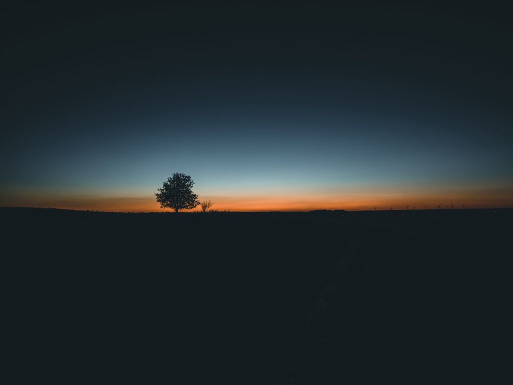 1024x768 Wallpaper tree, horizon, minimalism, sunset