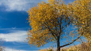 Preview wallpaper tree, leaves, autumn, nature, landscape