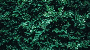 Preview wallpaper bush, leaves, macro, green
