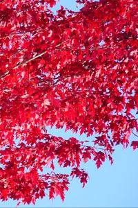 Preview wallpaper tree, leaves, red, autumn