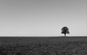 Preview wallpaper tree, minimalism, bw, horizon, field