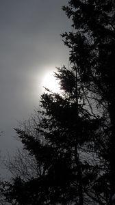 Preview wallpaper tree, silhouettes, sun, black and white, dark