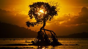 Preview wallpaper tree, sunset, roots, shore, bali