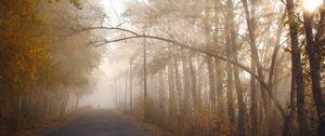 Preview wallpaper trees, autumn, haze, branch, path, silhouette, sun, light