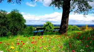 Preview wallpaper trees, benches, flowers, nature