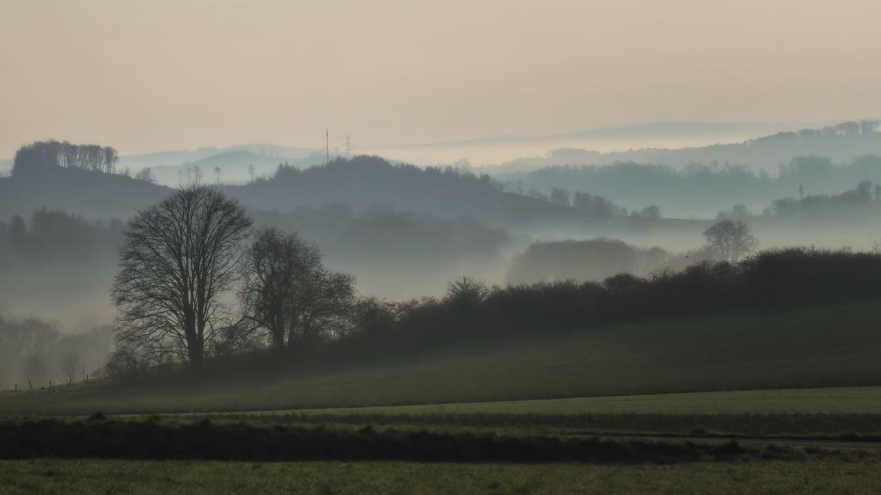 Wallpapertrees,field,fog,nature,landscape高清壁纸免费下载