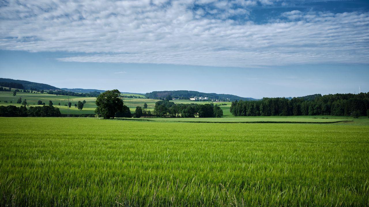 Wallpapertrees,field,landscape,nature高清壁纸免费下载