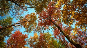 Preview wallpaper trees, forest, autumn, bottom view