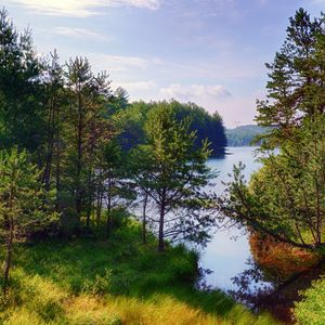 Preview wallpaper trees, forest, lake, nature, landscape
