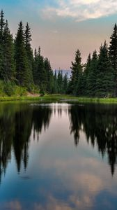 Preview wallpaper trees, forest, lake, reflection, nature