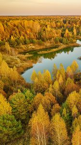 Preview wallpaper trees, forest, lake, autumn, landscape, aerial view