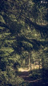 Preview wallpaper trees, forest, path, nature, landscape