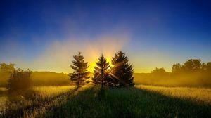 Preview wallpaper trees, grass, sunset, sky