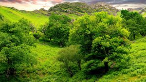 Preview wallpaper trees, green, brightly, grass, summer, mountains, relief, lowland, landscape, sky