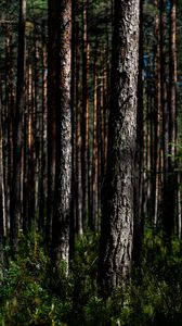 Preview wallpaper trees, nature, forest, landscape