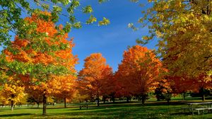 Preview wallpaper trees, park, autumn, grass, leaves