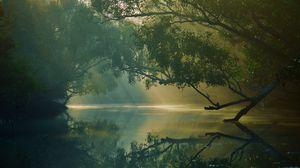 Preview wallpaper trees, river, reflection, forest, swamp, sundarbans, bangladesh