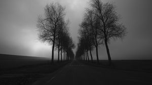 Preview wallpaper trees, road, black and white, black