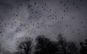 Preview wallpaper trees, silhouettes, birds, gloomy, dark