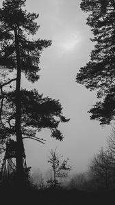 Preview wallpaper trees, silhouettes, fog, haze, black and white, dark