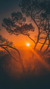 Preview wallpaper trees, sunset, branches, sky, los angeles, united states