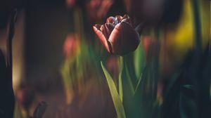 Preview wallpaper tulip, bud, blur, stem