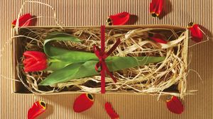 Preview wallpaper tulip, flower, boxes, gift, ribbon, petals, packing