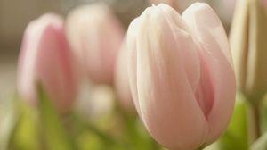 Preview wallpaper tulip, flower, bud, petals