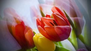 Preview wallpaper tulip, flower, petals, plant
