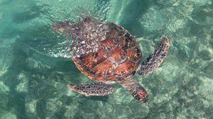 Preview wallpaper turtle, sea, water, swim