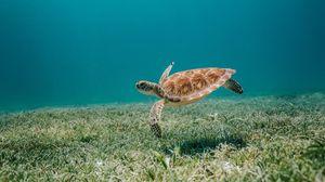 Preview wallpaper turtle, sea, water, bottom, algae