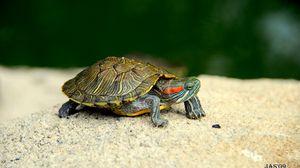 Preview wallpaper turtle, shell, legs, head
