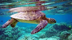 Preview wallpaper turtle, underwater, swimming, water